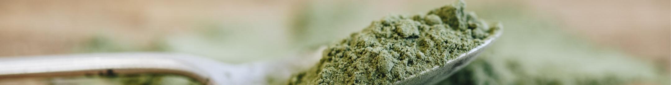 green tea matcha and matcha powder