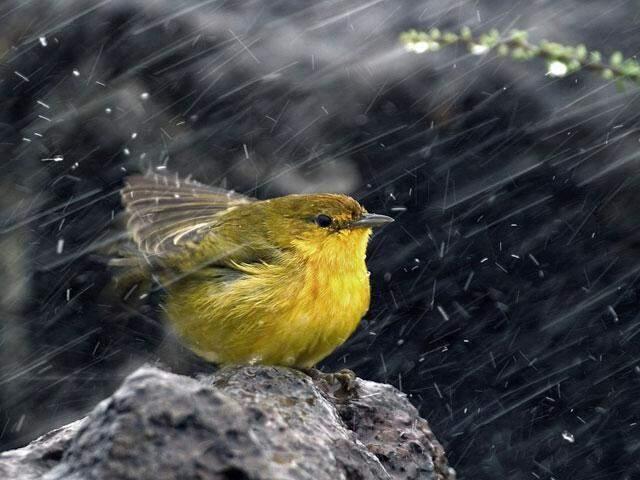 bird-storm-rain_si.jpg