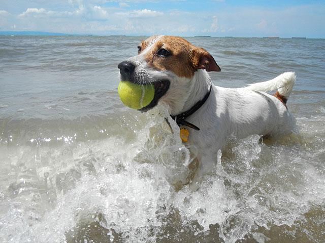 dog-fetch-ball
