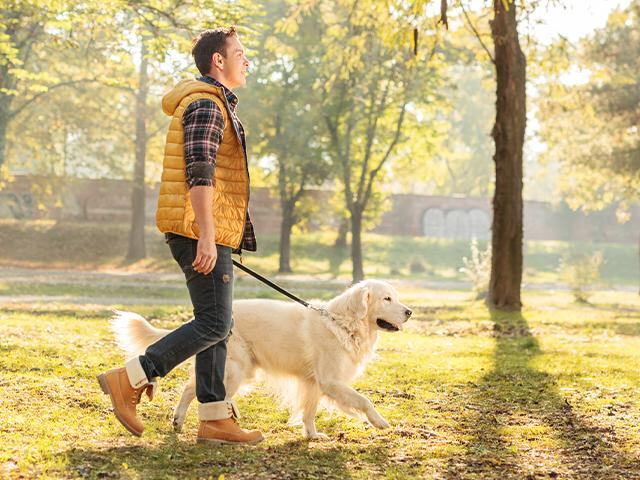 man walking his dog on a sunny day
