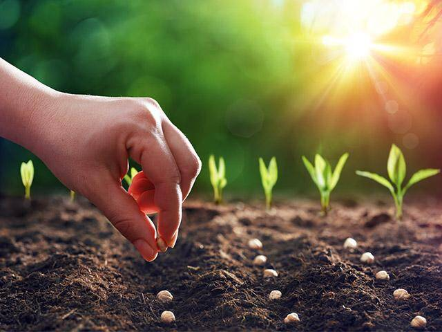planting-sowing-seeds