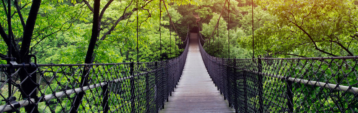 Bridge through a canopy of trees in a forest, the perfect place for eco-friendly travel tips