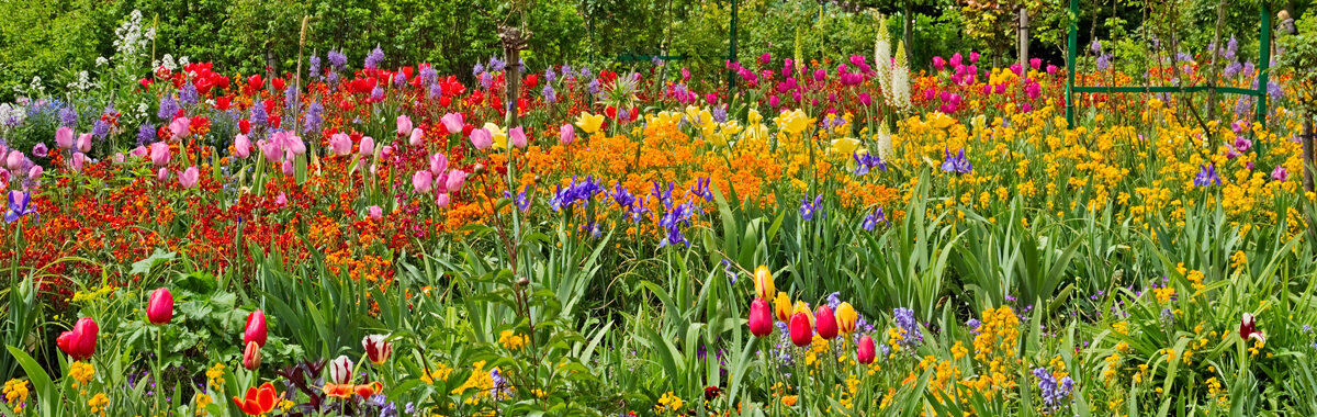 Beautiful, colorful flowers at Claude Monet Gardens in Giverny, France