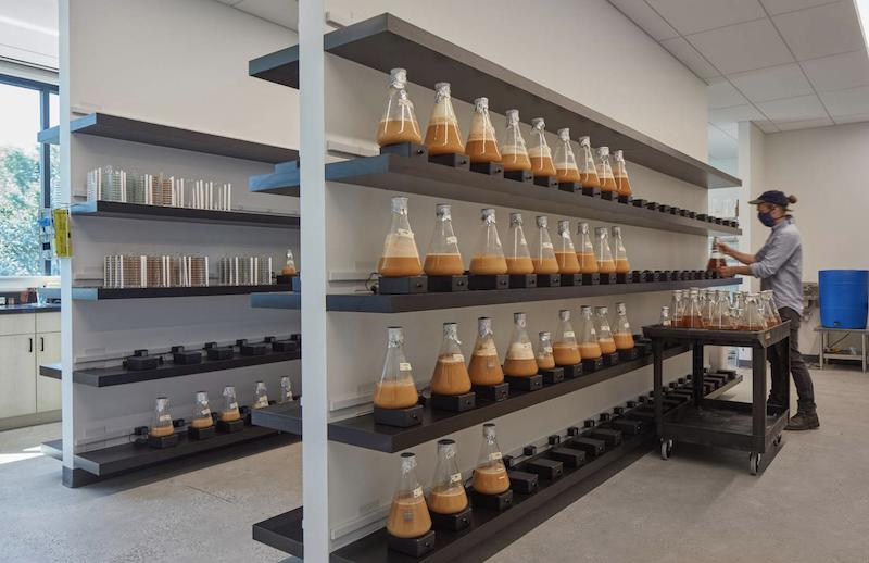 Omega Yeast production