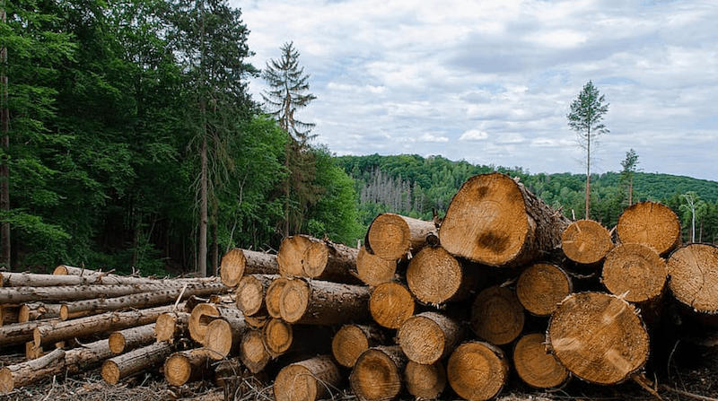 Managing forests to selectively cut trees for lumber
