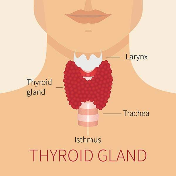 Thyroid Surgery Thyroid Removal