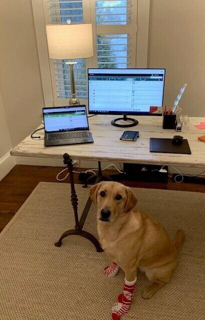 remote work setup - puppy