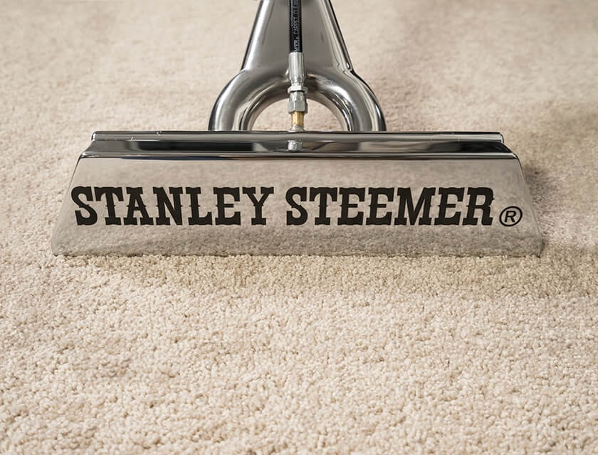 Stanley Steemer carpet cleaning wand on clean carpet.