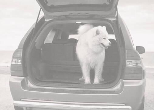 Car parked on the beach with a dog standing in the back of an open SUV hatchback.