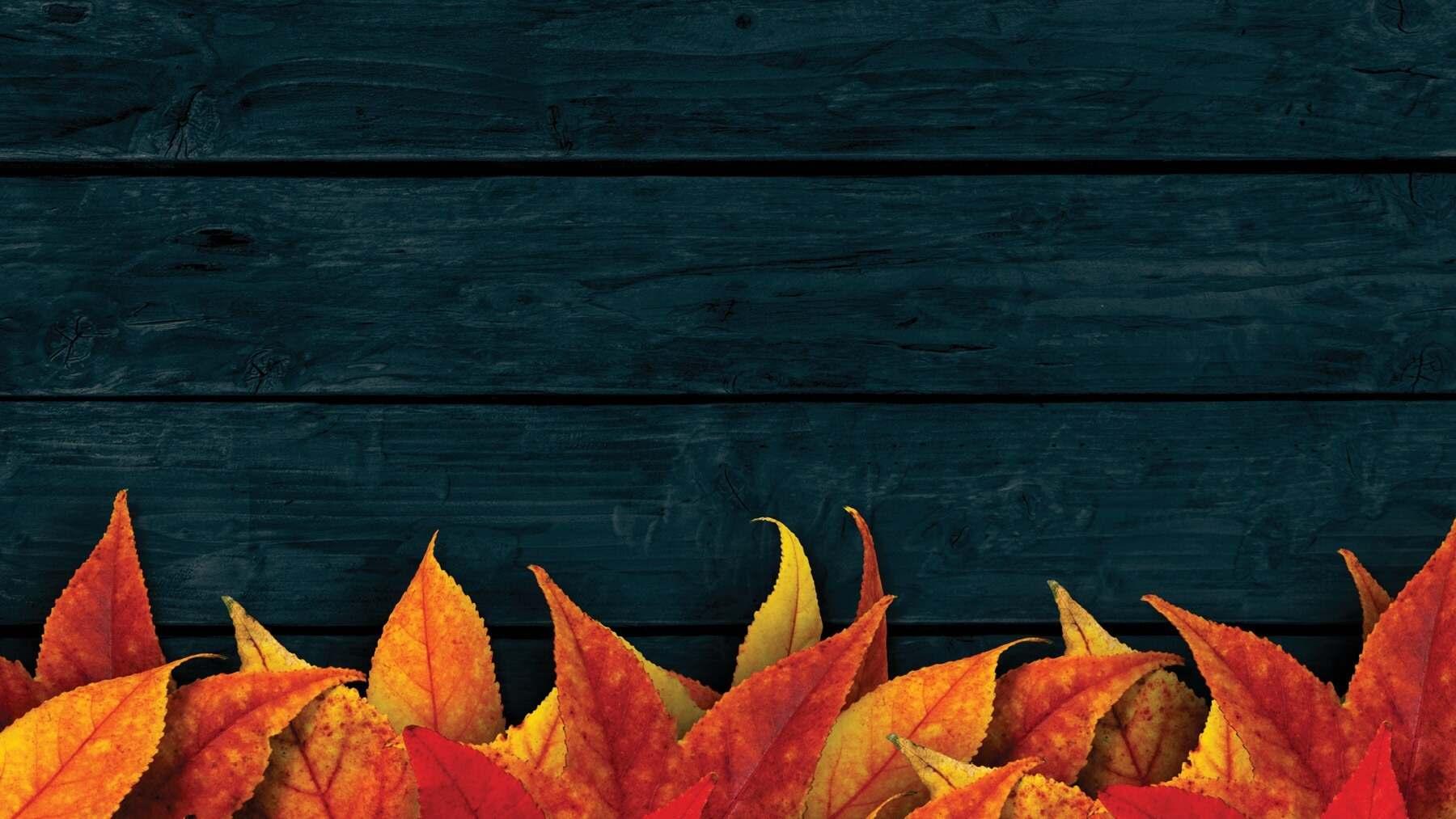 zoom background image 4
