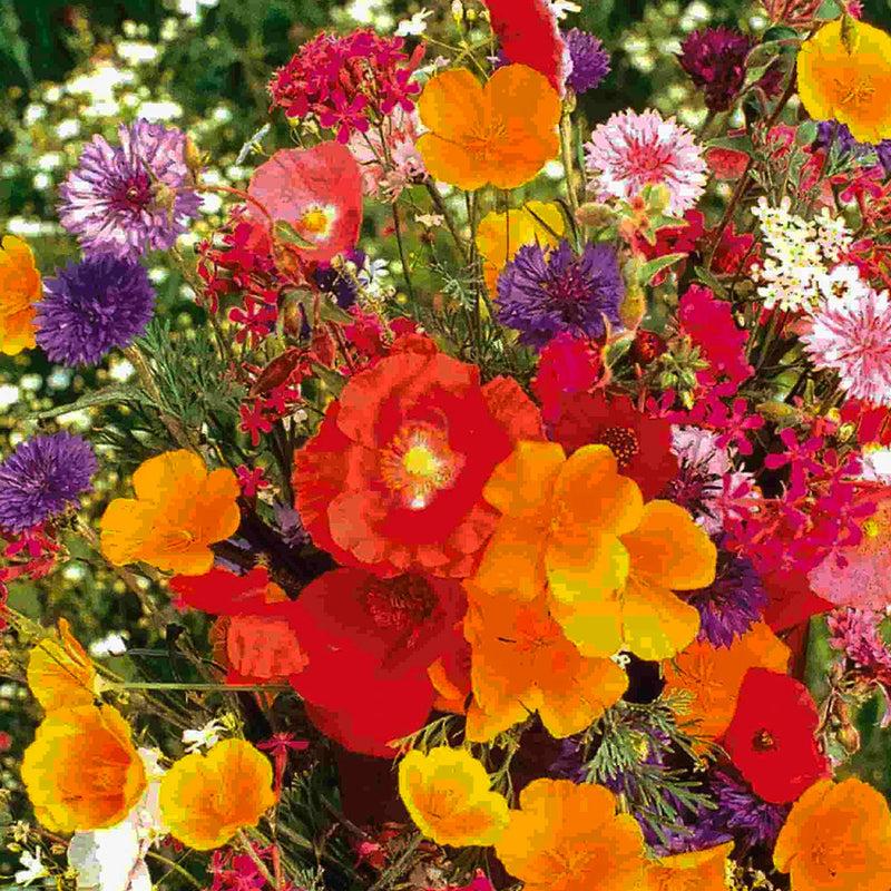 Unwins Pictorial Packet Aster Dwarf Queen Mix 150 Seeds Flower