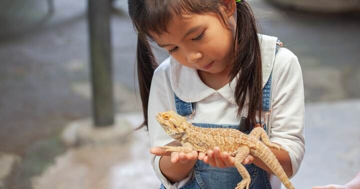 reptiles make great pets for kids with allergies
