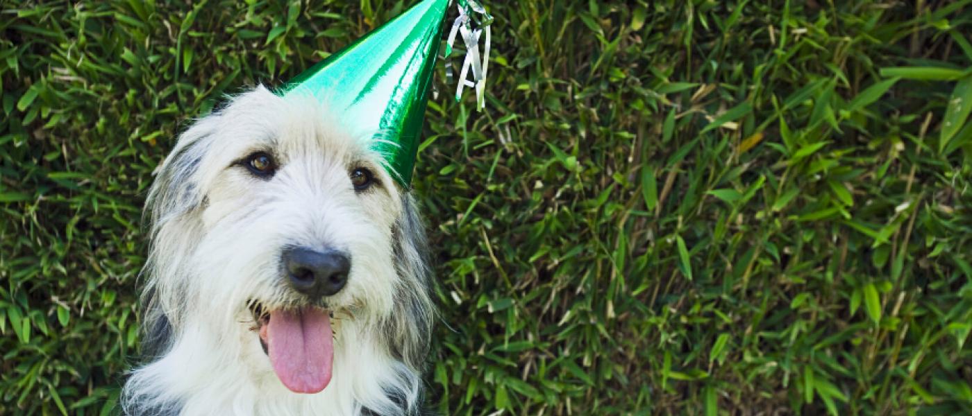 Complete List Of 2020 Pet Holidays Wellness Pet Food