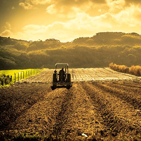Guide to Fertilizers & Chemicals in Fertilizers | Brenntag