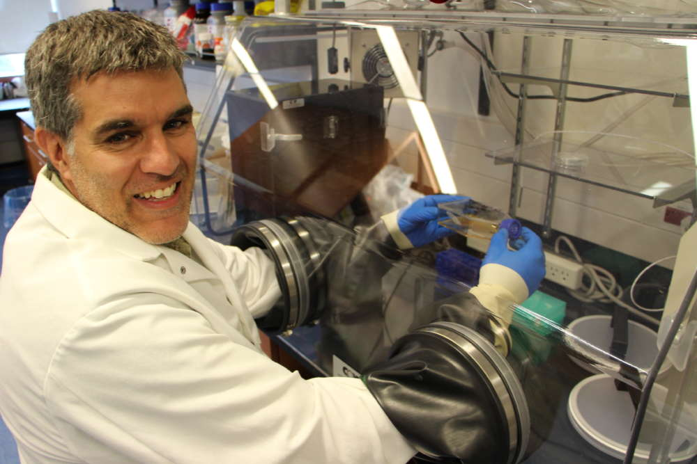 U of G Immunologist Has Concerns Over COVID-19 Vaccine Candidates - U of G  News