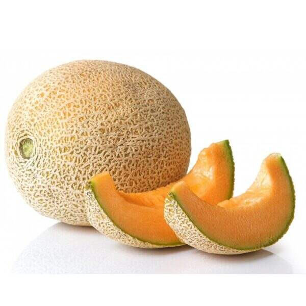 Cm5cz8oly0as4m Cantaloupe was introduced to europe in the 15th century and became a popular fruit due to its sweetness. https www seedway com product caribbean king cantaloupe treated seed