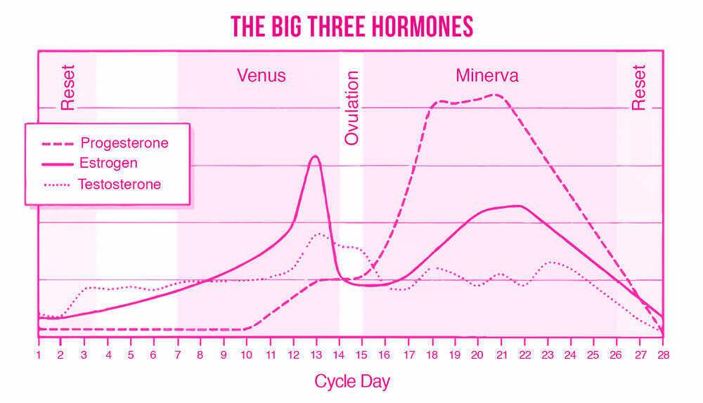 Hormones during menstrual cycle